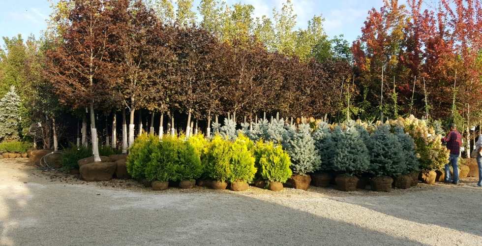 Big Trees 4U - home
